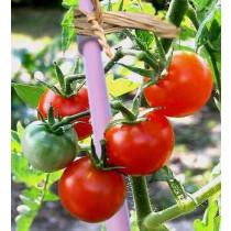 10 tuteurs de tomates violets, pliables